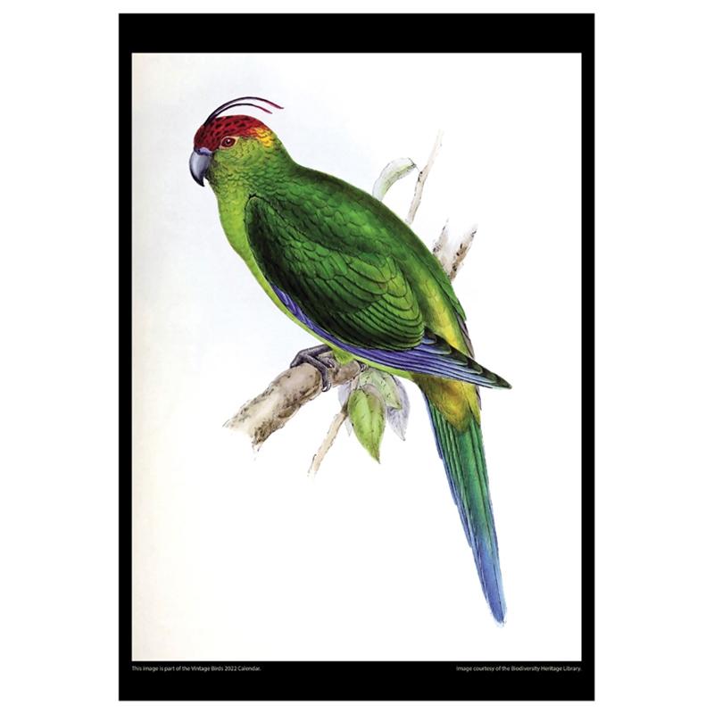 Asgard Press 2022 Vintage Birds Calendar